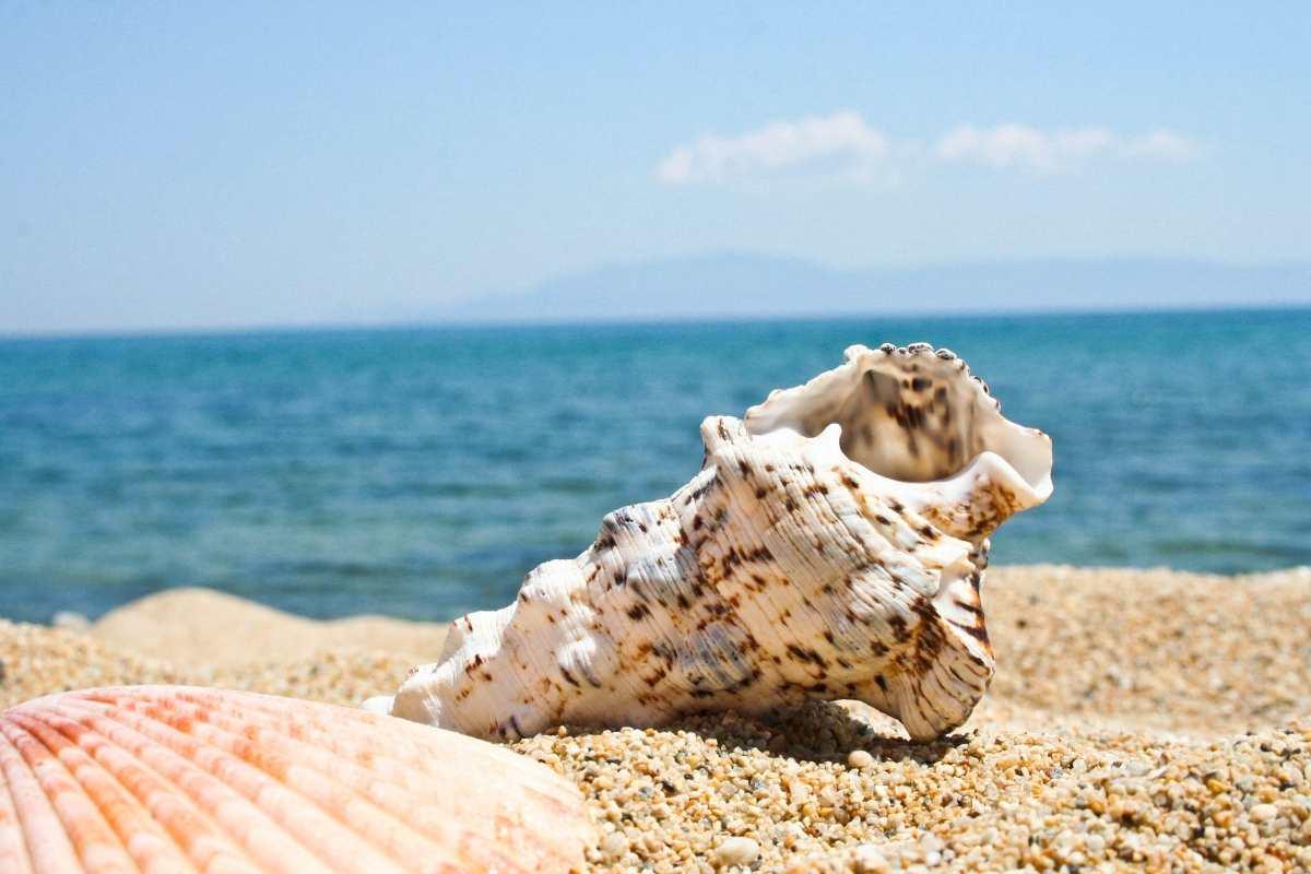 Κοχύλι παραλία Καβάλας