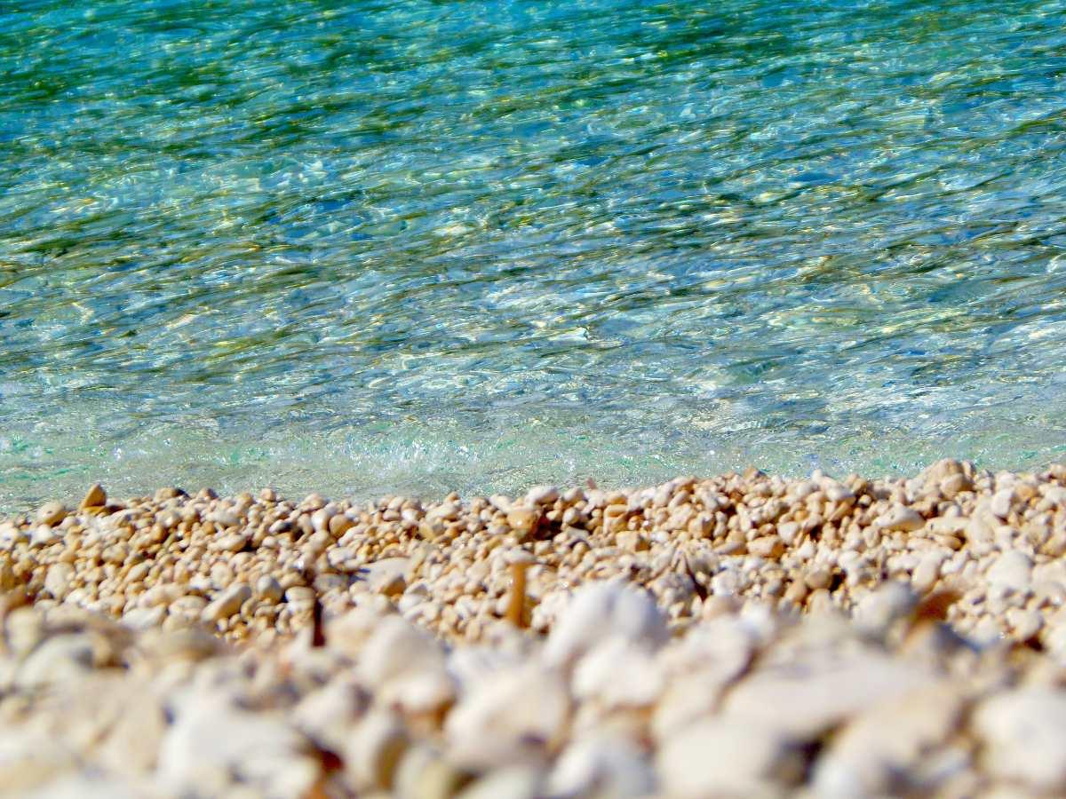 """Ναύπλιο: Μαύρο θαλάσσιο """"σκουλήκι"""" προκαλεί αναστάτωση σε παραλία (βίντεο)"""