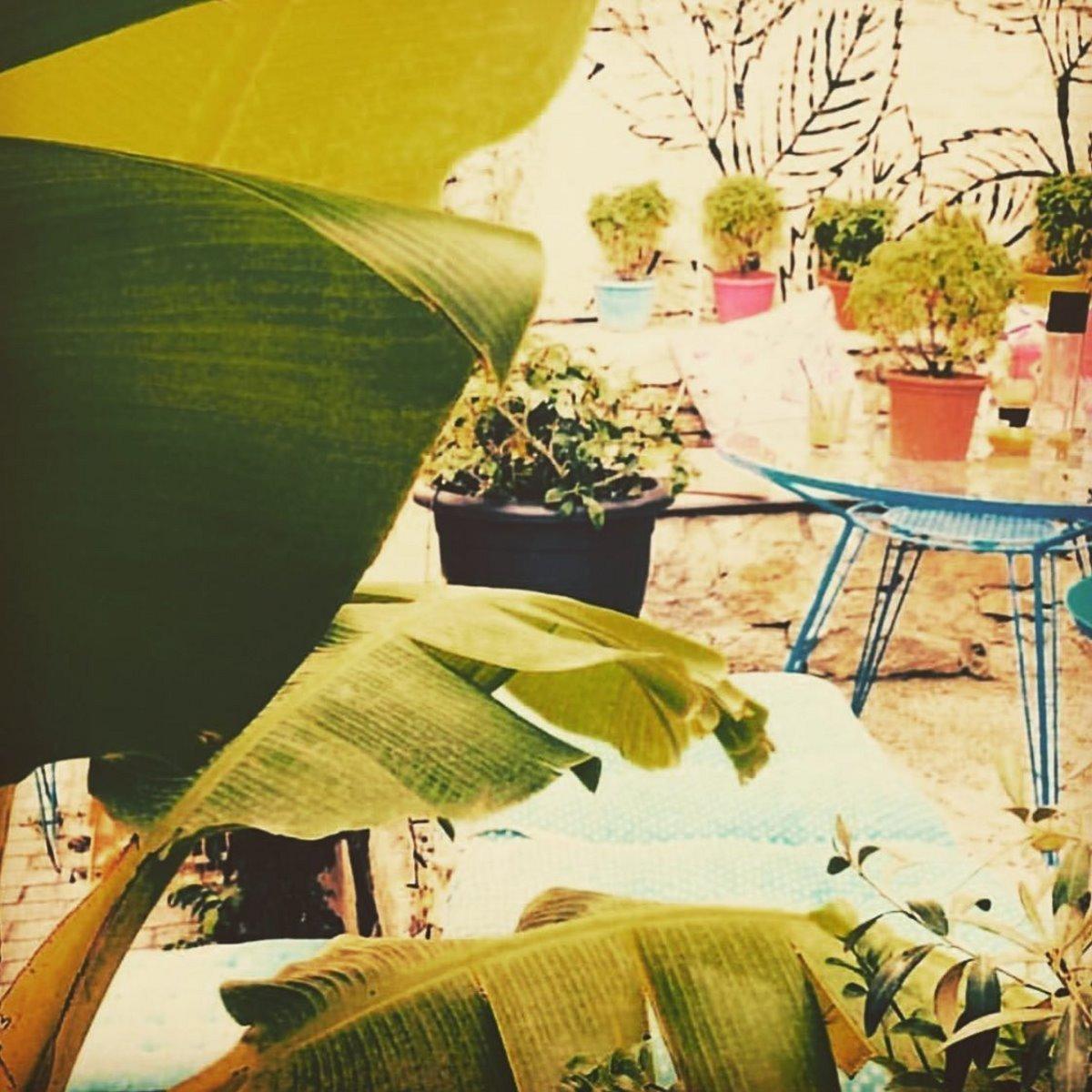 Πράσινο στο χώρο του Urban Garden Bar