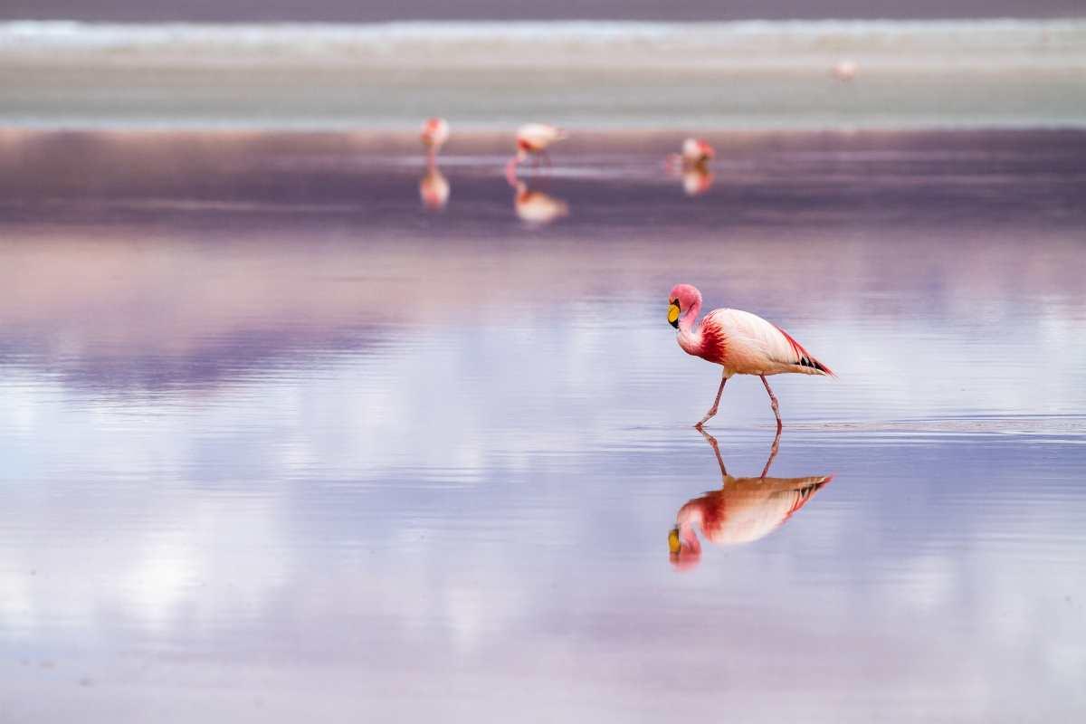 """Χαλκιδική: Φλαμίνγκο """"έβαψαν"""" ροζ τον υγροβιότοπο του Αγίου Μάμα (βίντεο)"""