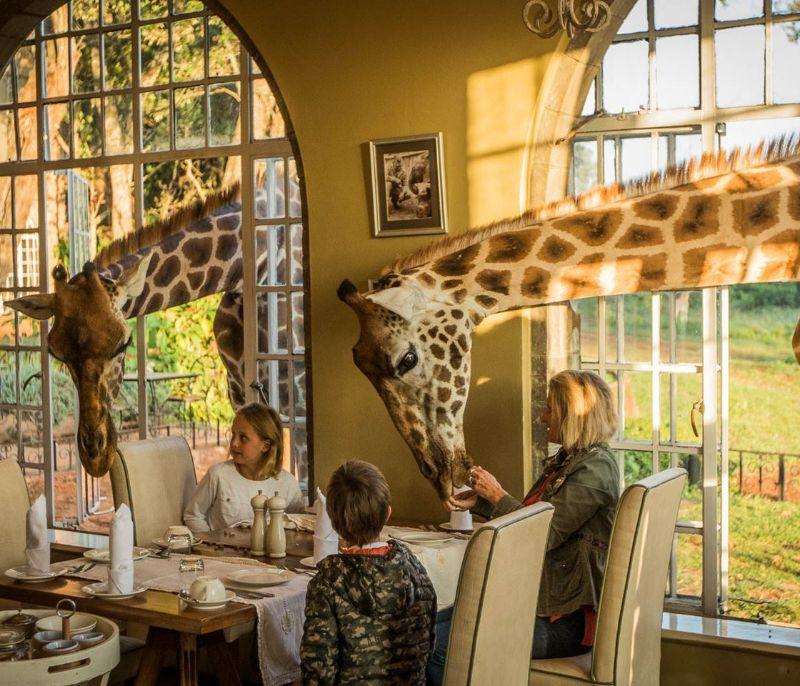 Giraffe Manor, Σουηδία ξενοδοχείο διαμονή 1