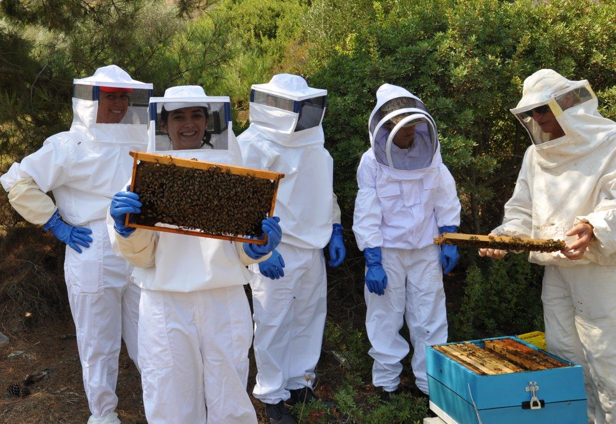 Μελισσοκομική Δωδεκανήσου, Ρόδος