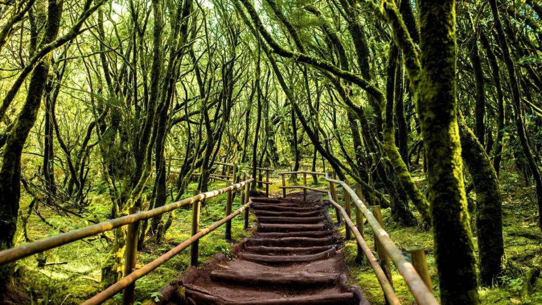 μονοπάτι, δάσος