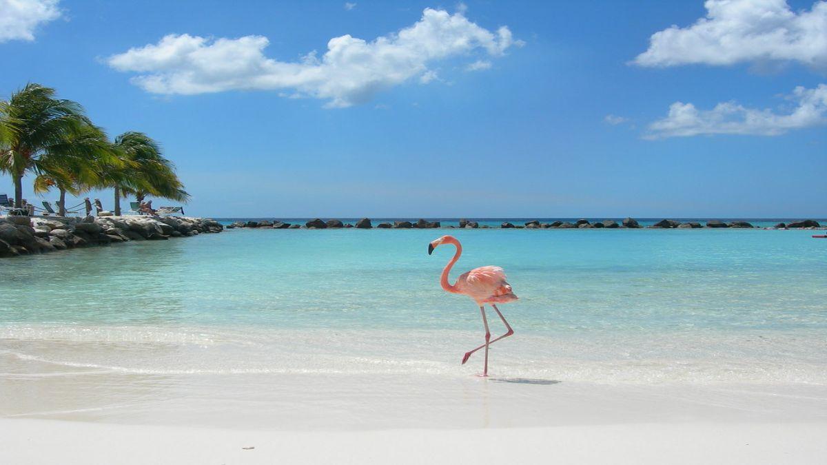 κούβα Playa Los Flamencos
