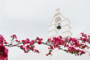 Τα 5+1 πιο όμορφα καλοκαιρινά λουλούδια για τον κήπο ή το μπαλκόνι σας