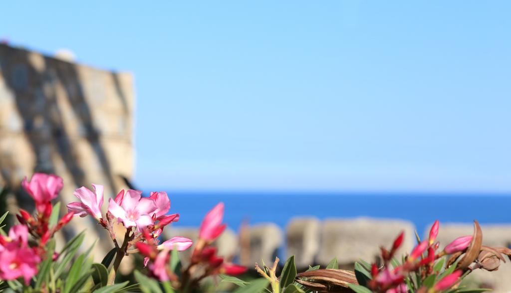 Casa Palma λουλούδια