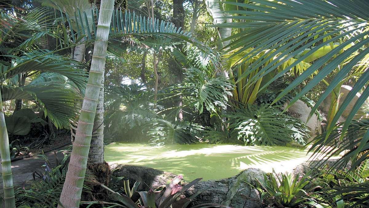 5άστερο ξενοδοχείο Rosemont Hotel & Residences Ντουμπάι τροπικό δάσος κοντινό