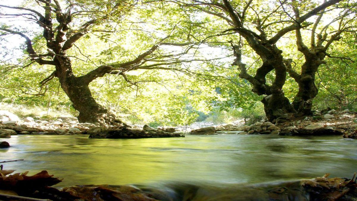 Abeliona Retreat φύση