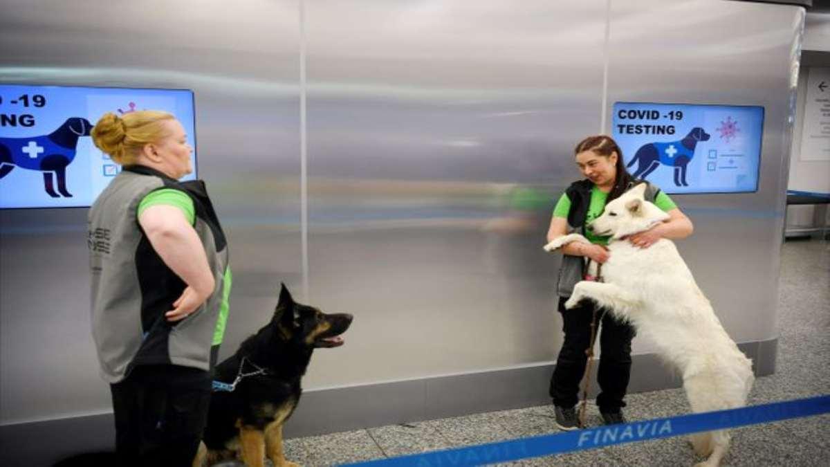 αεροδρόμιο Ελσίνκι σκυλιά κορονοϊός