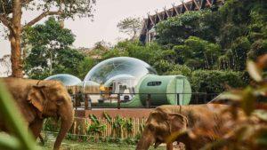 Ξενοδοχείο στη ζούγκλα προσφέρει την καλύτερη θέα… στα άγρια ζώα!
