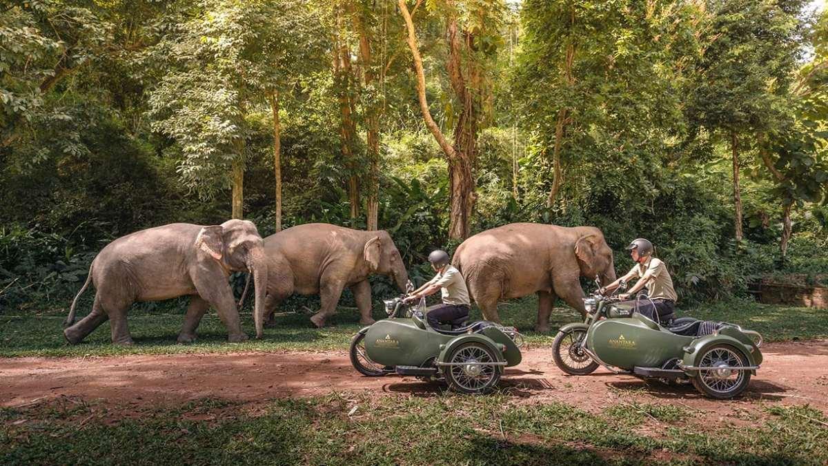 anantara resort δάσος ελέφαντες επισκέπτες
