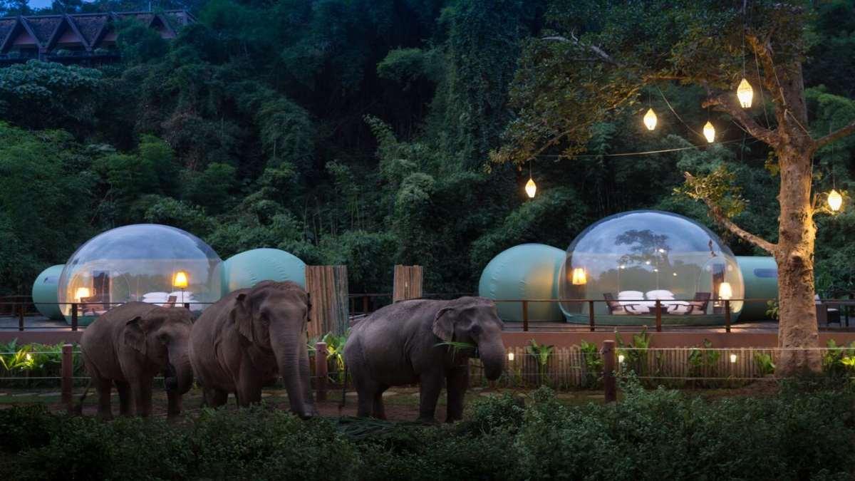 anantara resort δωμάτια φούσκες ελέφαντες