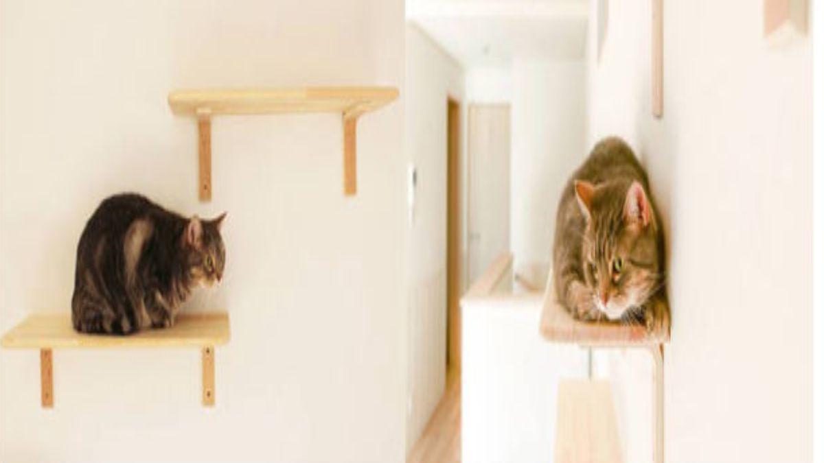 ξύλινα ράφια για γάτες