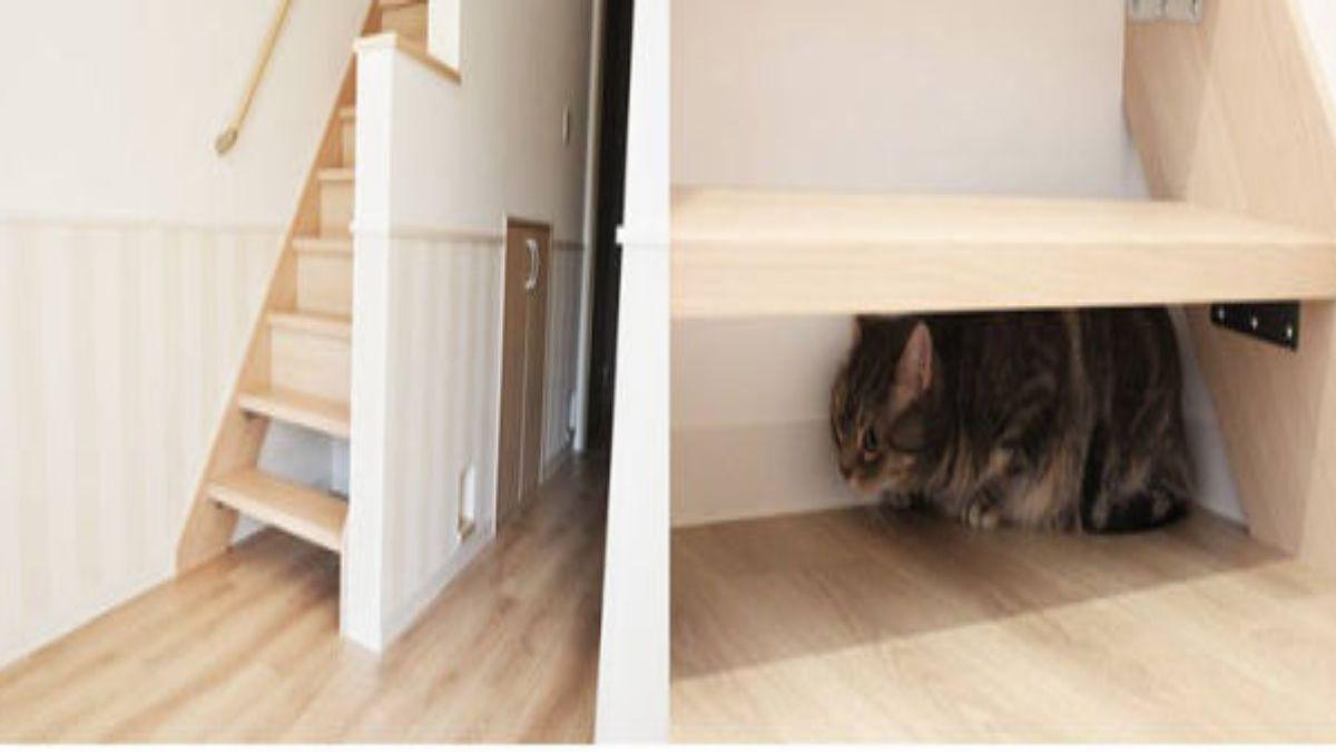 Χώροι στις σκάλες για να κρύβονται οι γάτες