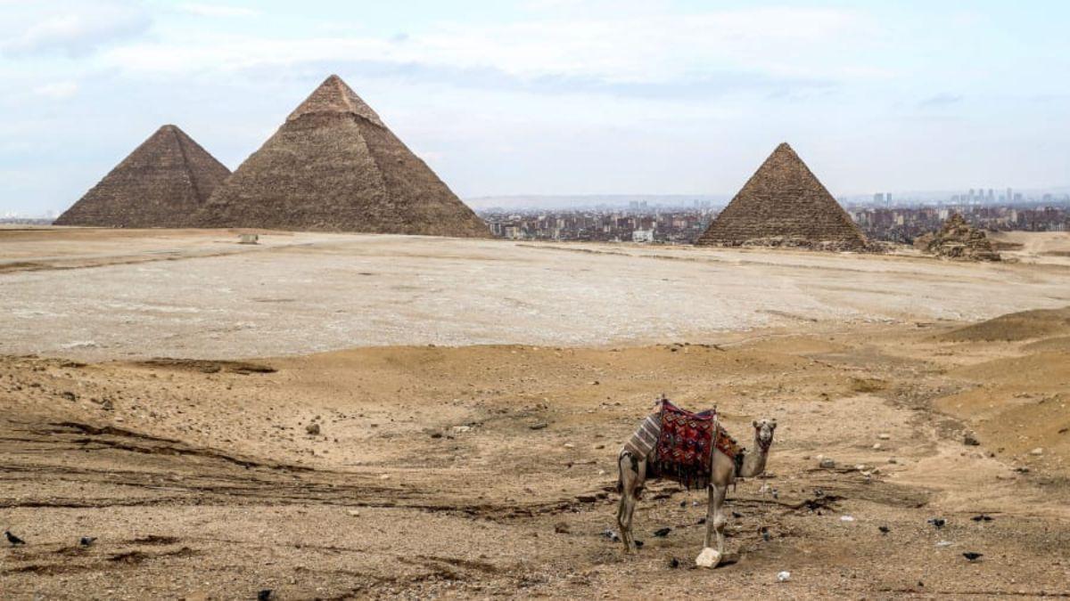 Καμήλα στις πυραμίδες Αιγύπτου