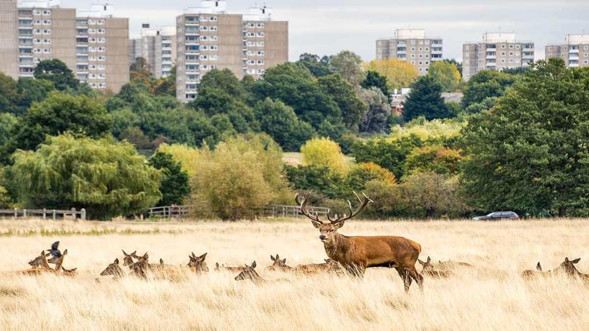 τάρναδος σε πάρκο στο Λονδίνο