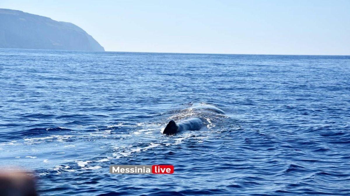 φάλαινα φυσητηρας στην μάνη