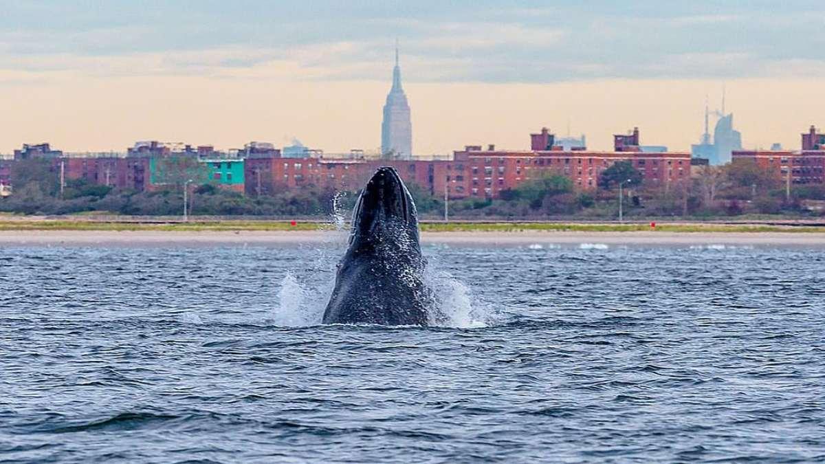 φάλαινα στη Νέα Υόρκη