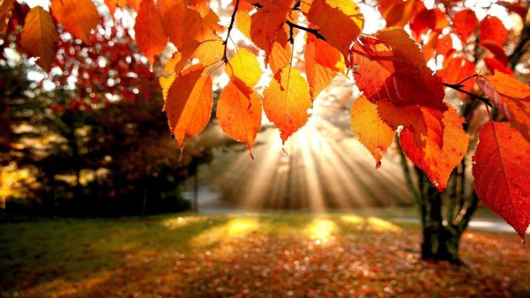 φθινόπωρο φύση πορτοκαλί φύλλα δέντρου