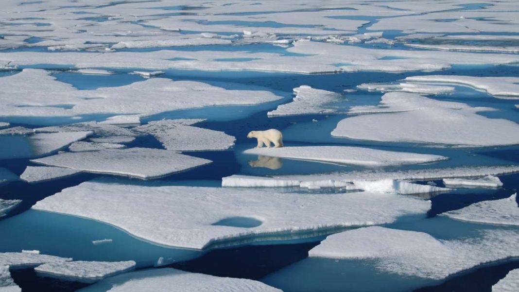 γροιλανδία λιώσιμο πα΄γων πολική αρκούδα