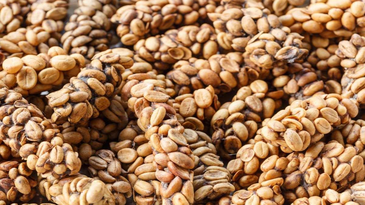 καφές kopi Luwak κόκκοι
