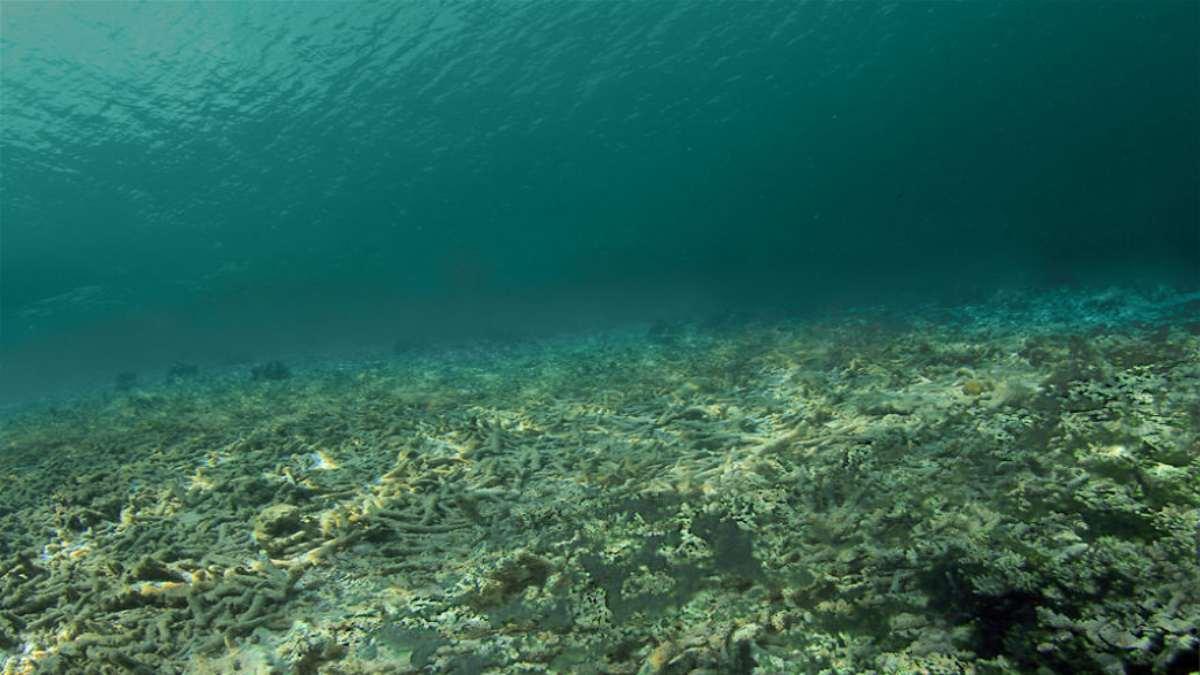 κοραλλιογενής ύφαλος μετά την κλιματική αλλαγή