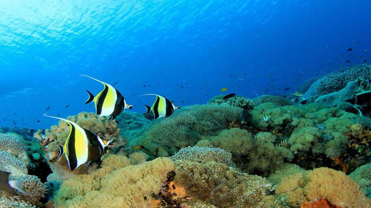 κοραλλιογενής ύφαλος ψάρια