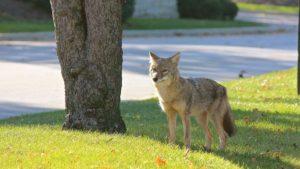Αστικό σαφάρι: Άγρια ζώα κατέβηκαν στις μεγαλουπόλεις του κόσμου!