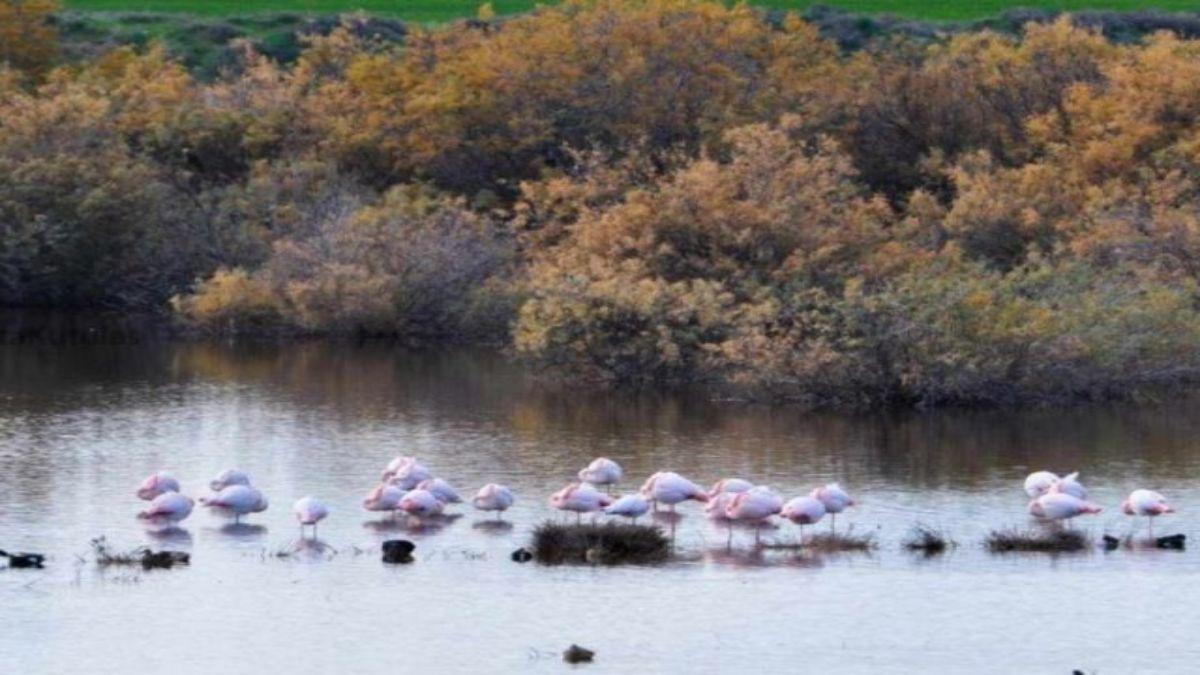 Λίμνη Ορόκλινης Λάρνακας