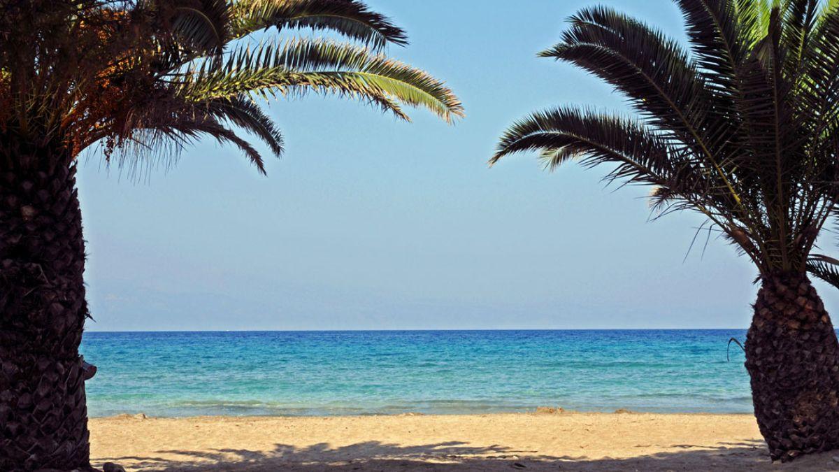 Λεπίτσα φοίνικες μπροστά στην παραλία