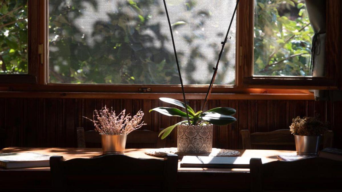 Ωριάς διακόσμηση με φυτά