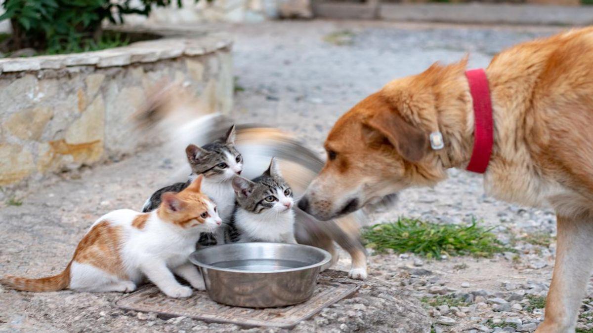 Ωριάς γάτες και σκύλος