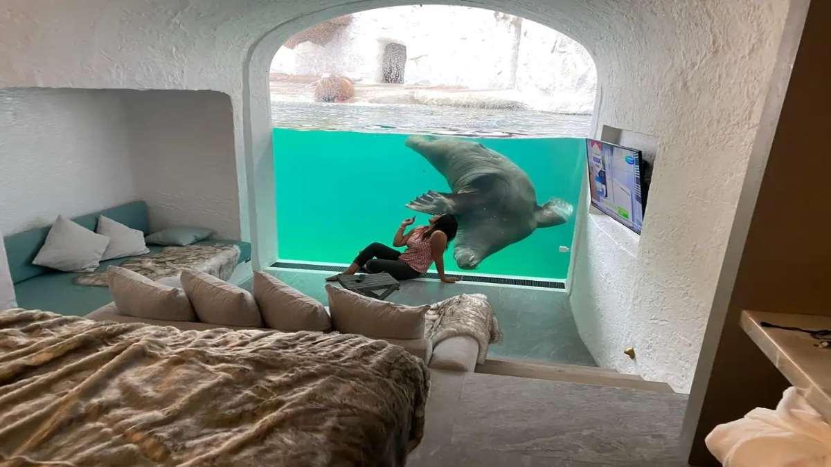 pairi daiza υποβρύχιο δωμάτιο άγριο ζώο και γυναίκα