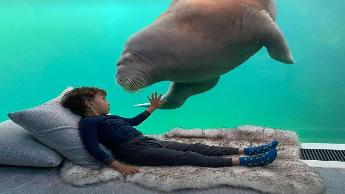 pairi daiza resort υποβρύχιο δωμάτιο αγόρι θαλάσσιος ελέφαντας κοντινό