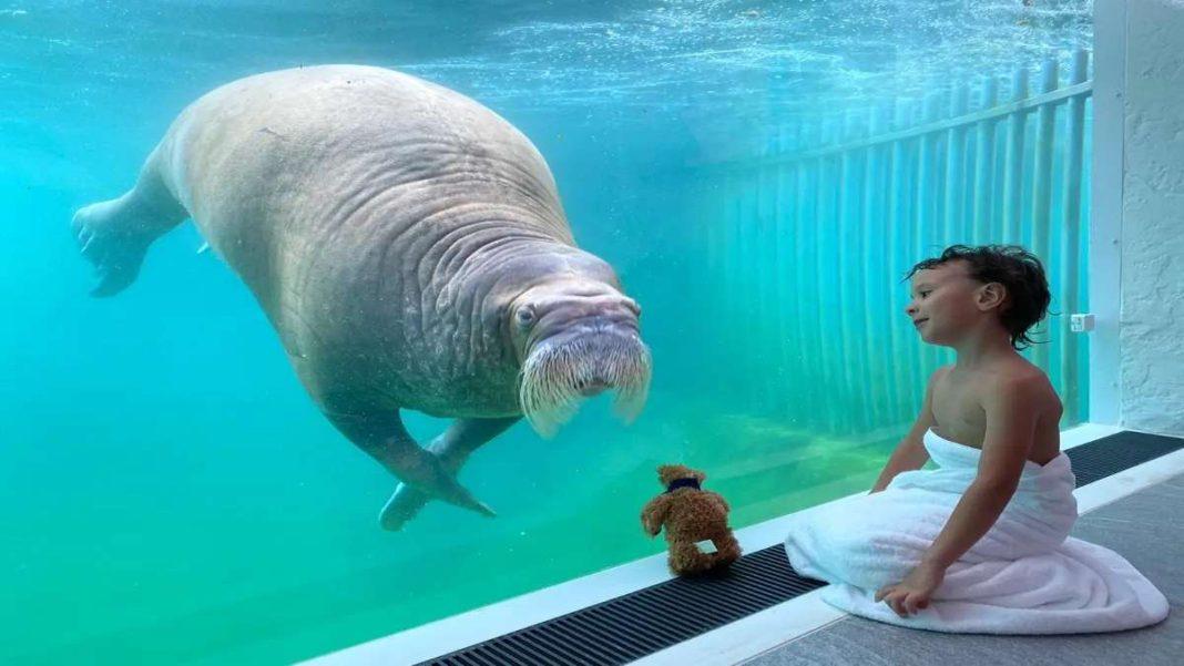pairi daiza resort δωμάτιο κάτω από νερό αγόρι θαλάσσιος ελέφαντας