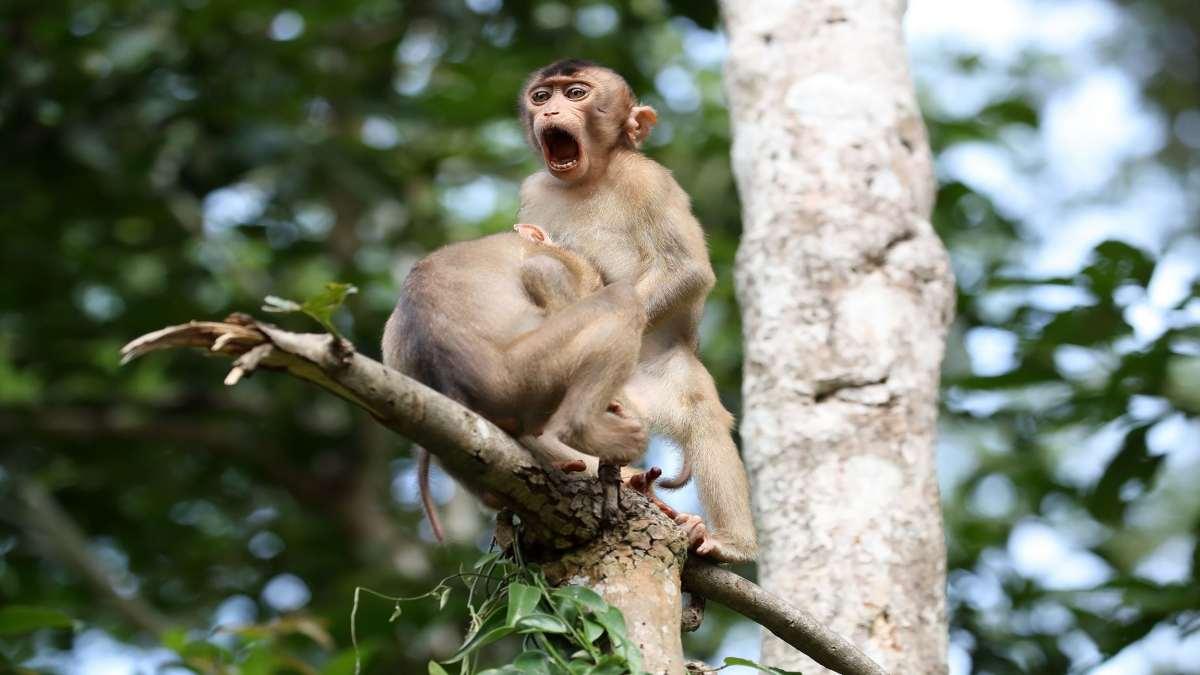 πίθηκοι πάνω σε δέντρο