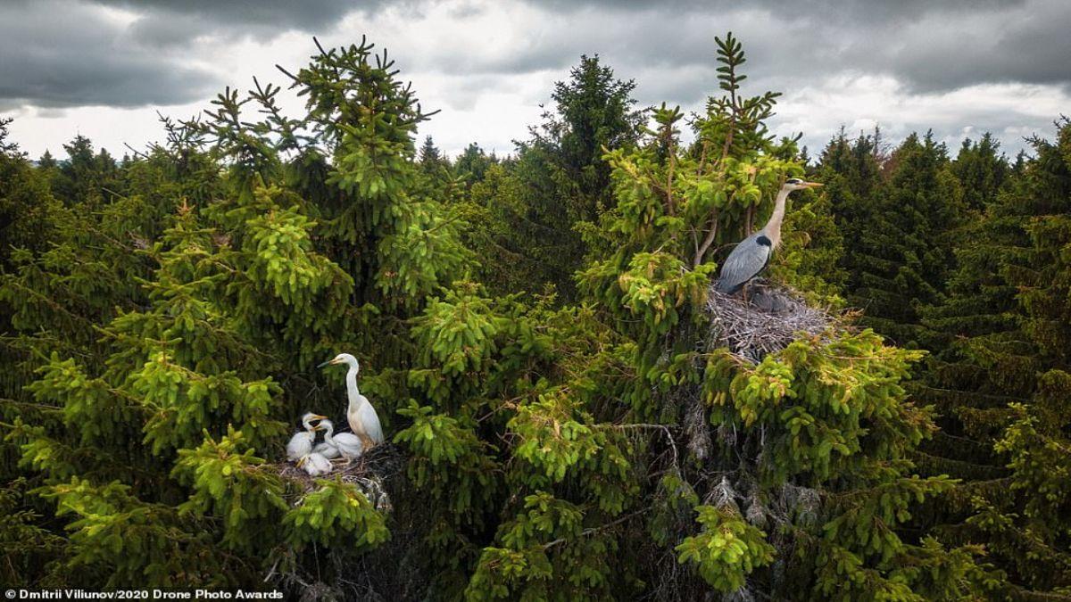 πουλιά που φωλιάζουν σε δάσος