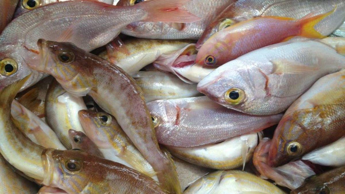 Ψάρια Λέρος