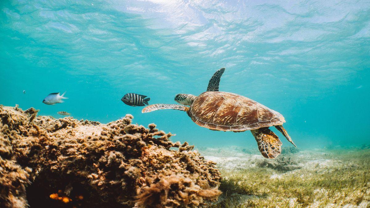 Queensland Αυστραλία