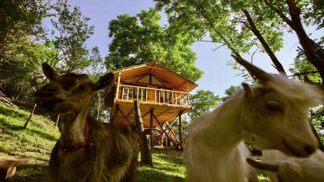 transylvania tree house δεντρόσπιτο ζώα