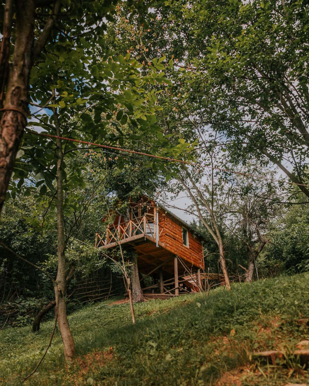transylvania tree house δεντρόσπιτο εξωτερική λήψη μακρινό