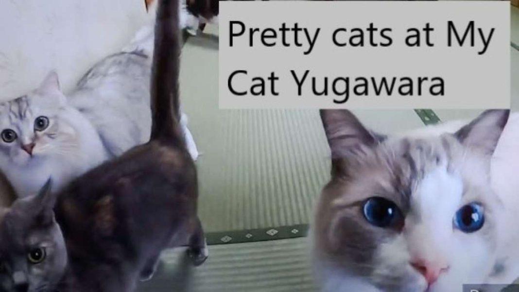 γάτες ξενοδοχείο με γάτες
