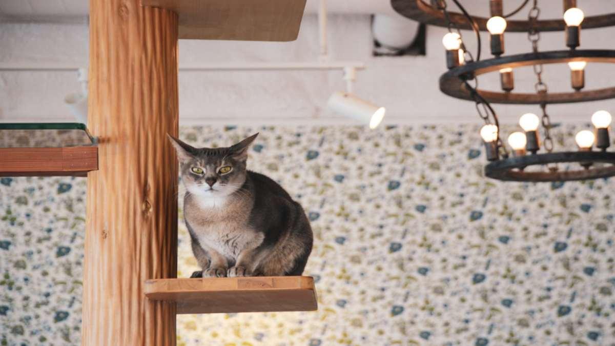γάτα στο ξενοδοχείο My Cat Yugawara