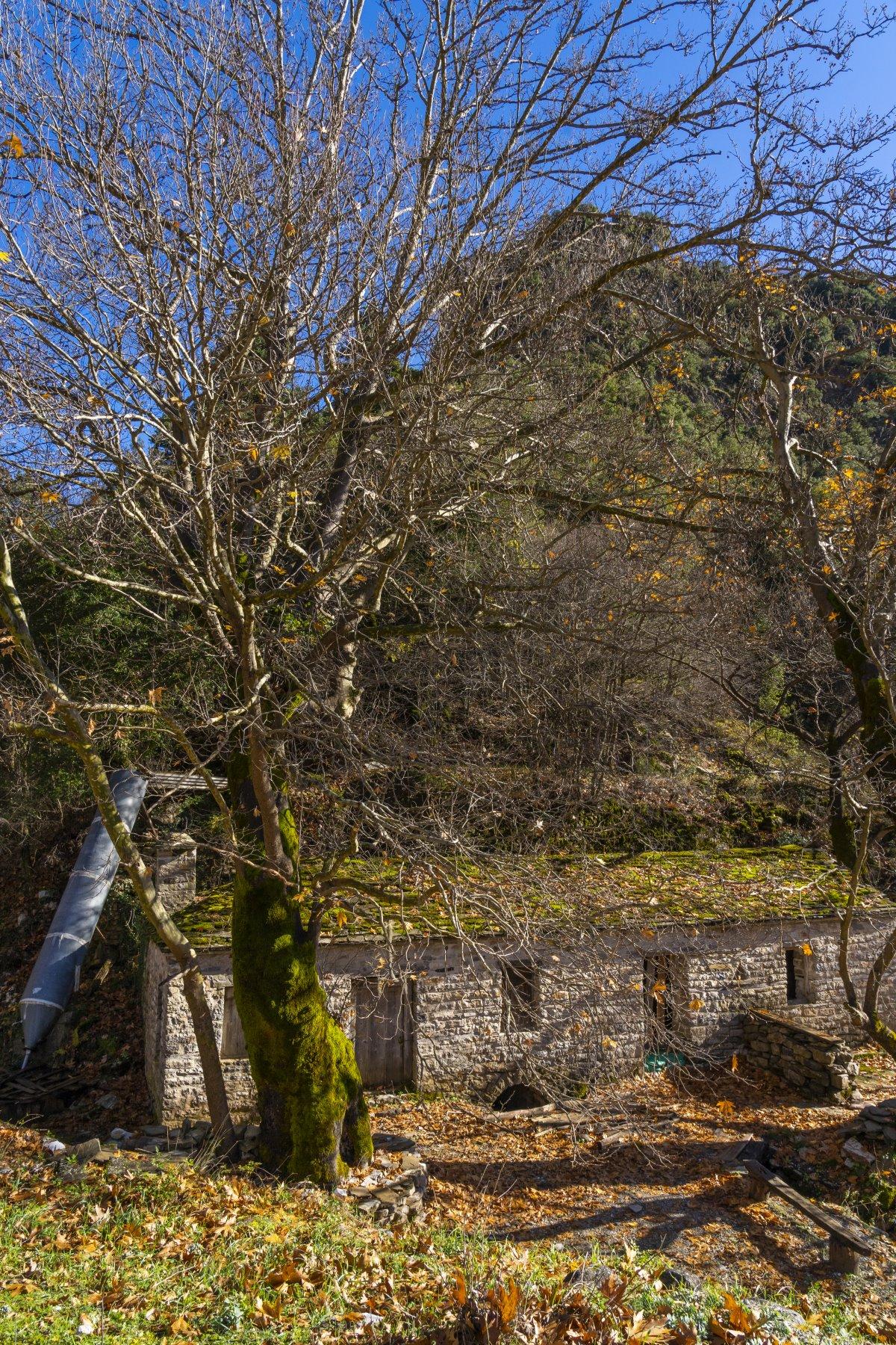 Λεοντίτο χωριό Αργιθέας μέσα στα έλατα νερόμυλος στο χωριό