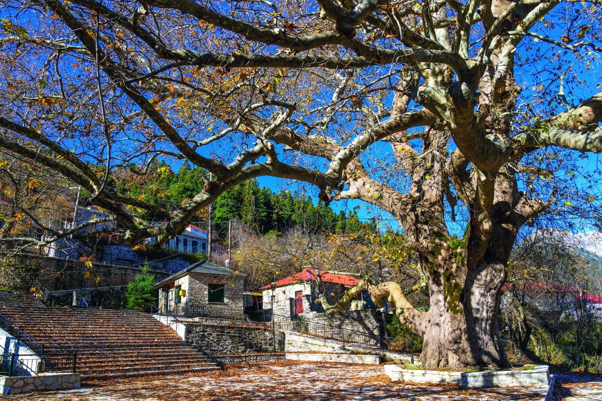 Λεοντίτο χωριό Αργιθέας μέσα στα έλατα κεντρική πλατεία με τον πλάτανο
