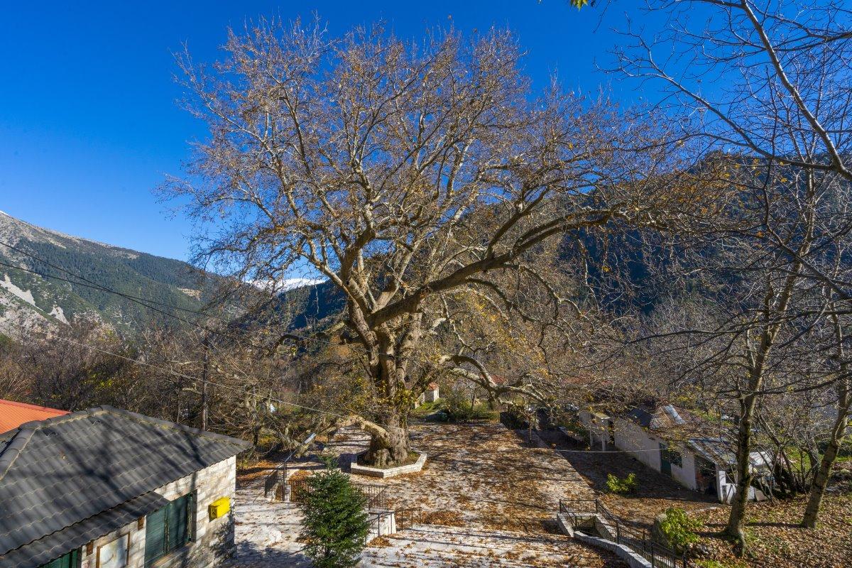 Λεοντίτο χωριό Αργιθέας μέσα στα έλατα πανοραμική στον πλάτανο