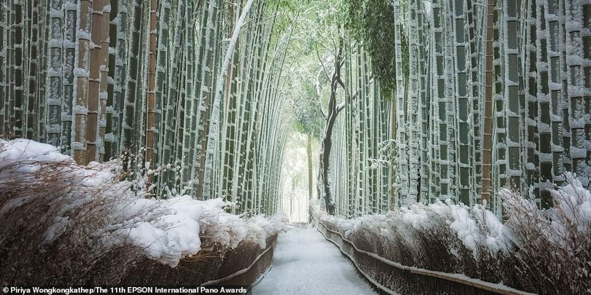 Το δάσος μπαμπού του Κιότο, όπως το αποθανάτισε η Piriya Wongkongkathep, από την Ταϊλάνδη