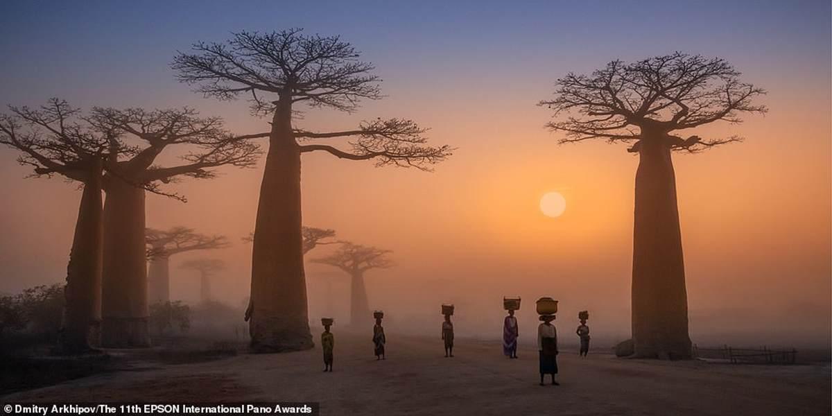 Αυτή η υπνωτική εικόνα τραβήχτηκε στη Λεωφόρο των Μπαομπάμπ της Μαδαγασκάρης από τον Ρώσο φωτογράφο Dmitry Arkhipov