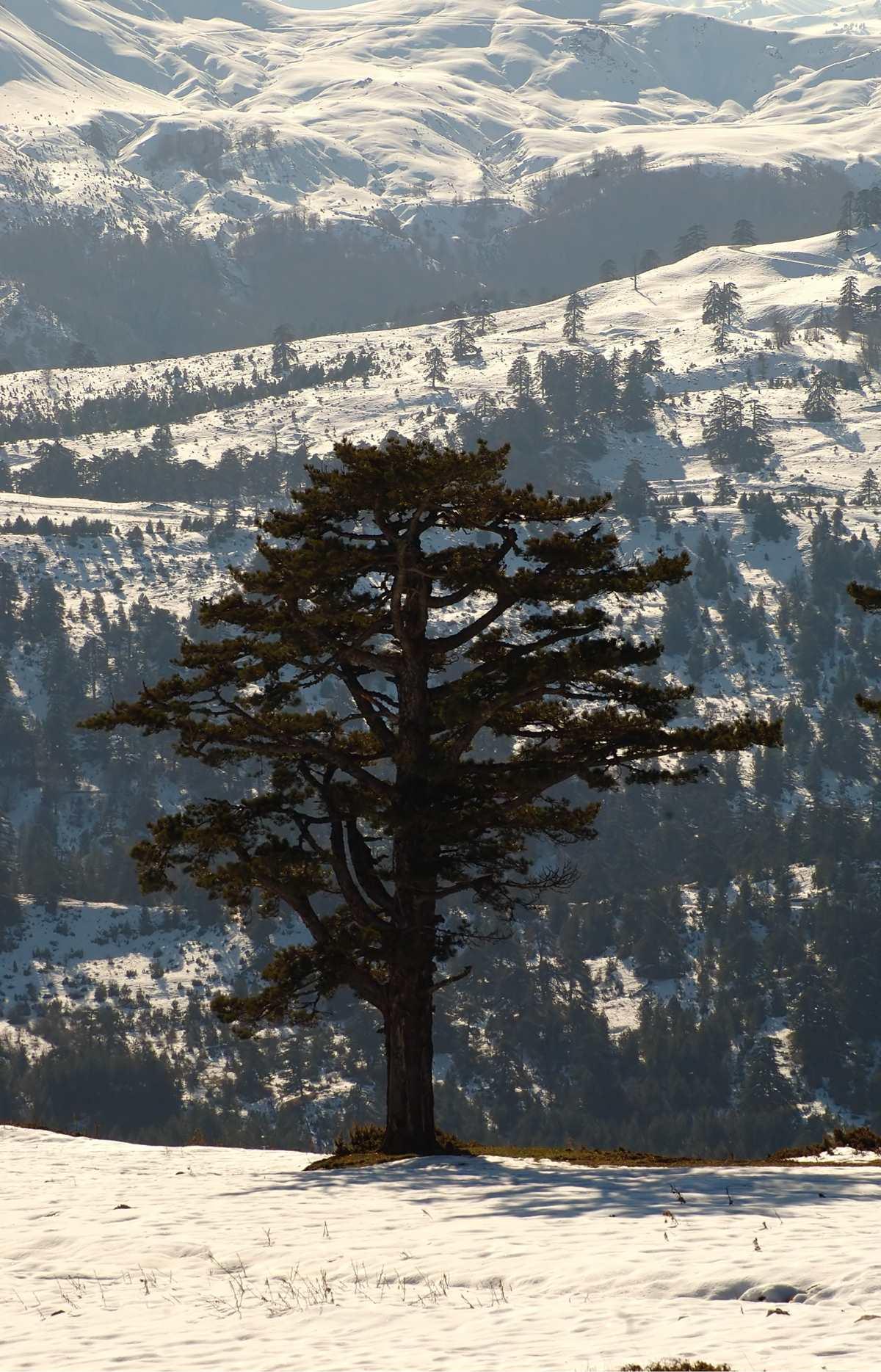 Χιονισμένο τοπίο Σαμαρίνα