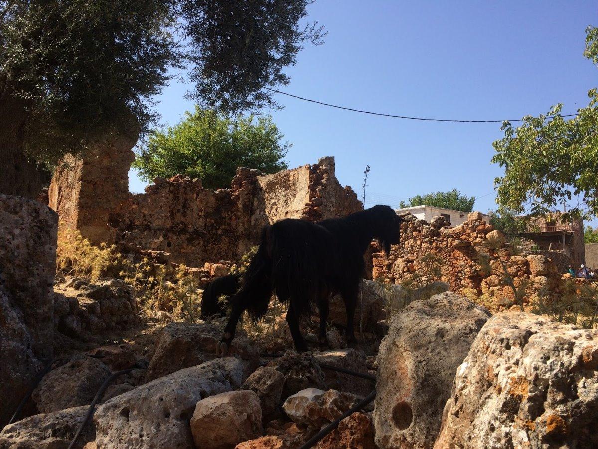 Αράδαινα Σφακίων πέτρινα γκρεμισμένα σπίτια κατσίκα